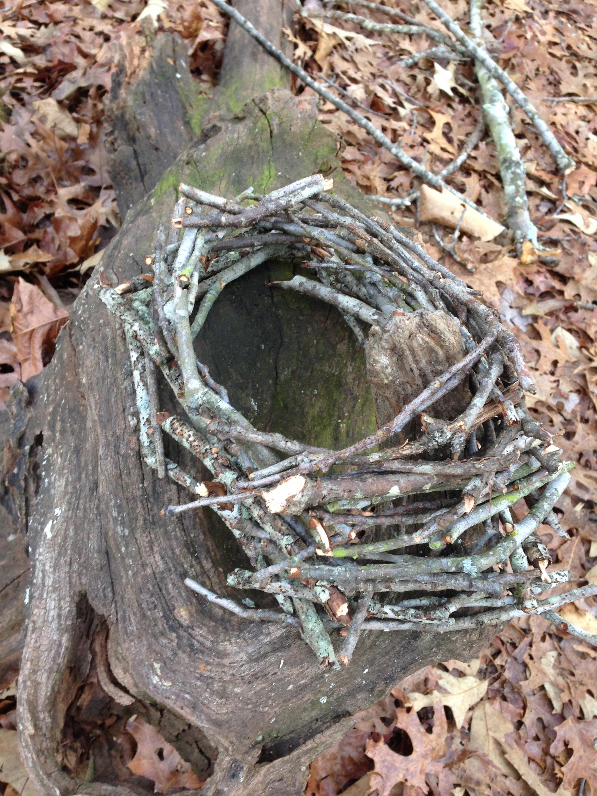 Nest on stump. Lake Herrick Trails. The University of Georgia. Athens, GA. Winter 2013