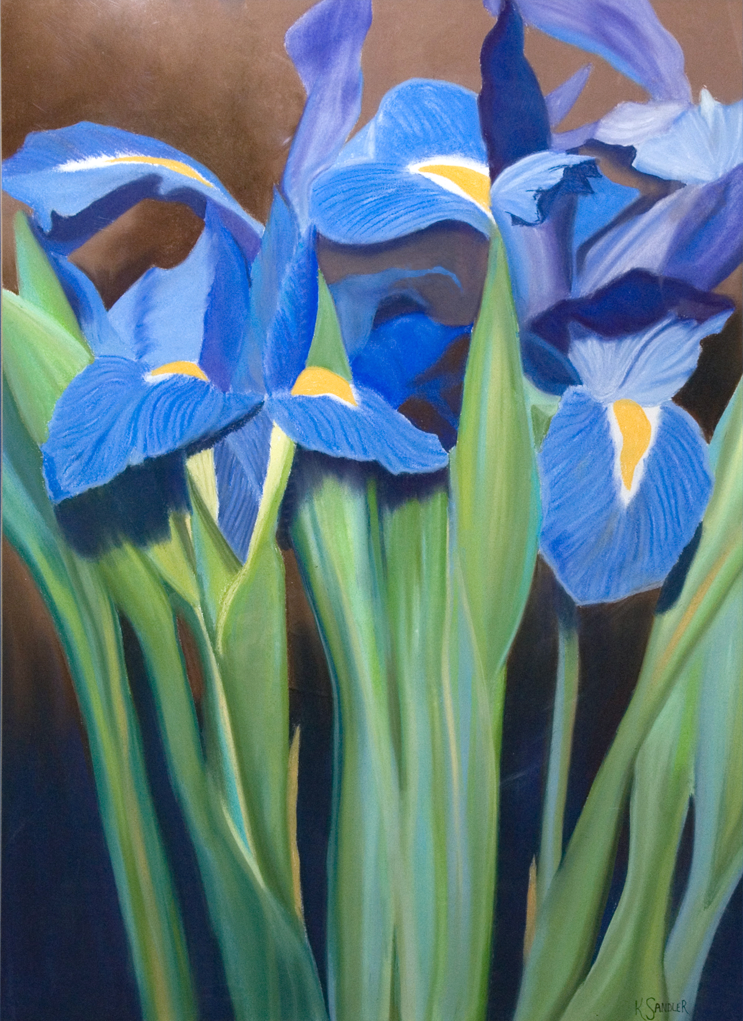 Blue Irises.jpg