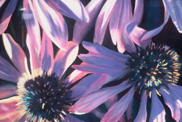 Cone Flowers.jpg