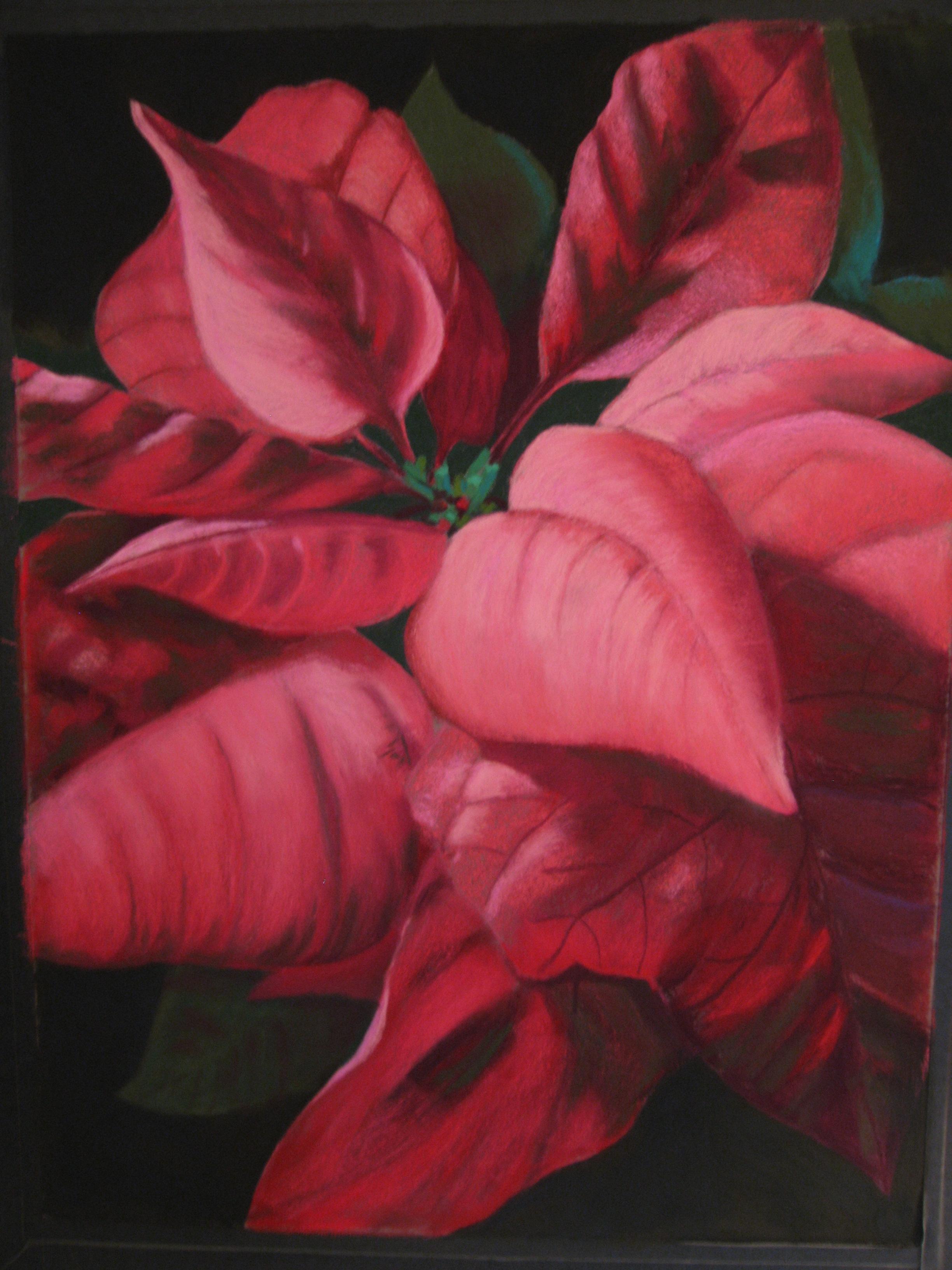 Poinsettia #4.JPG