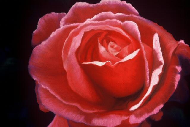 Rose Perfection.jpg