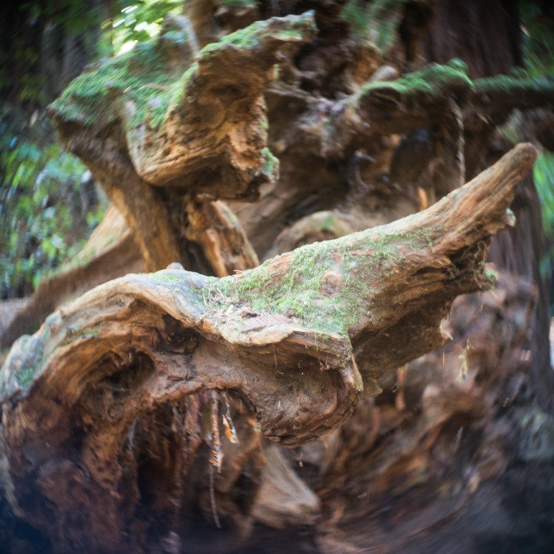 john_mireles_redwoods (2 of 7).jpg