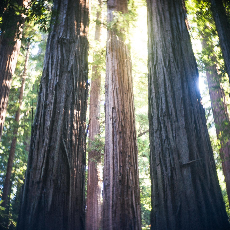 john_mireles_redwoods (1 of 7).jpg