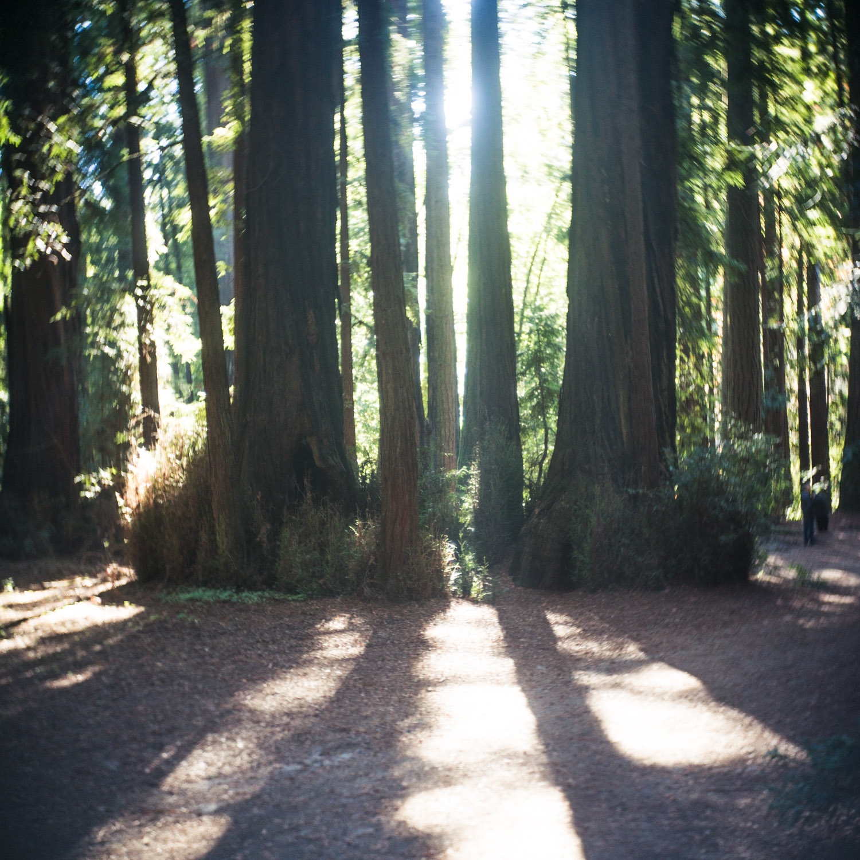 john_mireles_redwoods (3 of 7).jpg