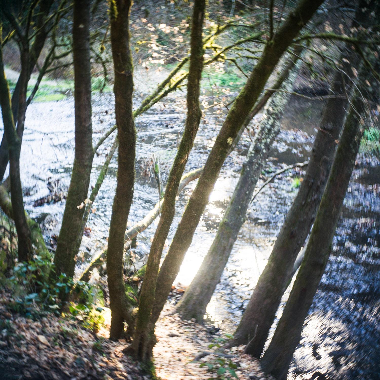 john_mireles_redwoods (4 of 7).jpg