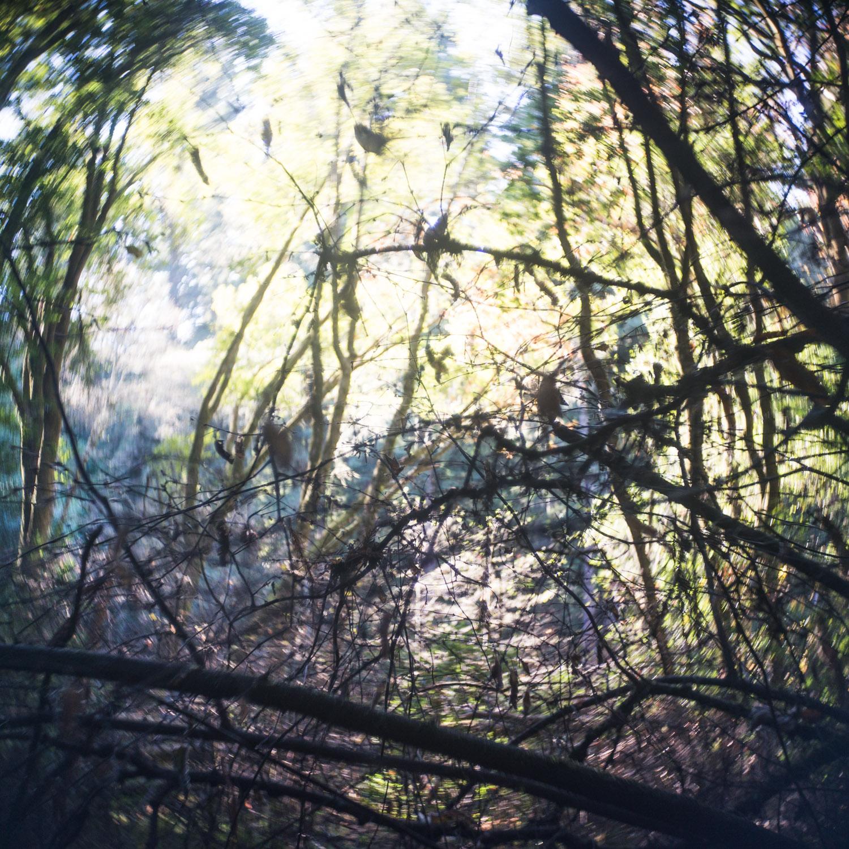 john_mireles_redwoods (5 of 7).jpg