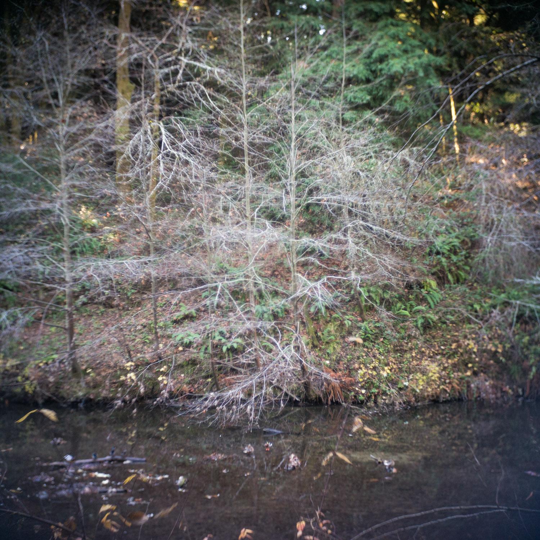 john_mireles_redwoods (6 of 7).jpg