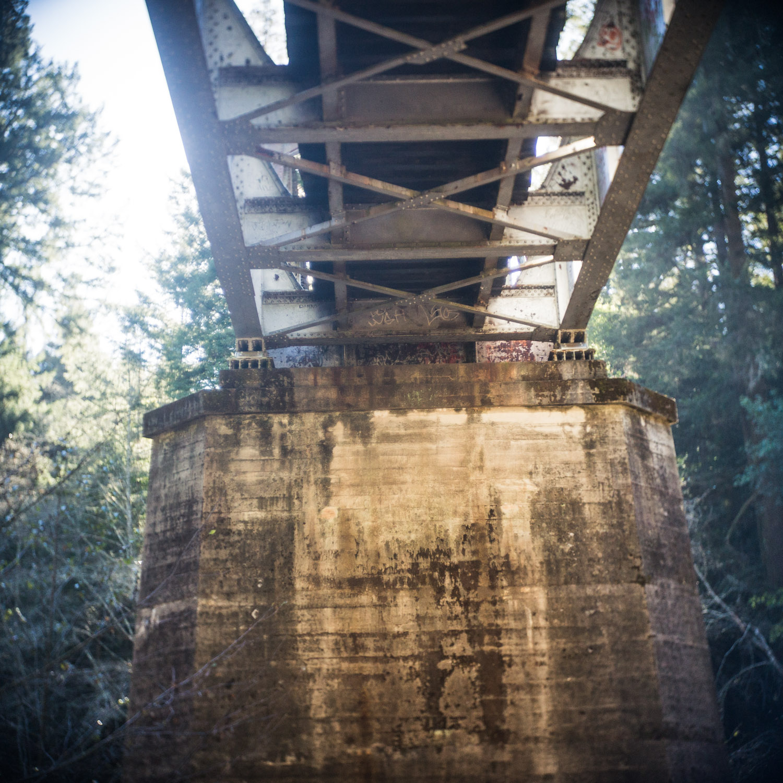 john_mireles_redwoods (7 of 7).jpg