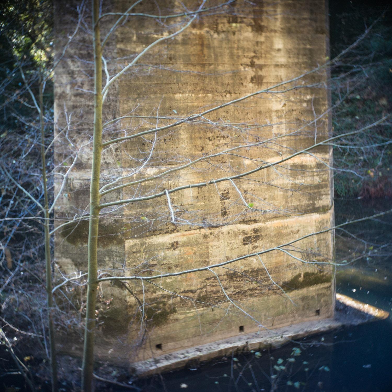 john_mireles_redwoods (2 of 3).jpg