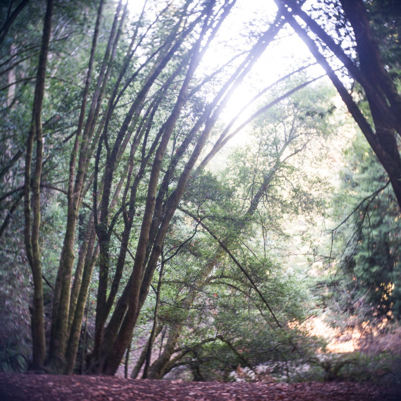 john_mireles_redwoods (1 of 3).jpg
