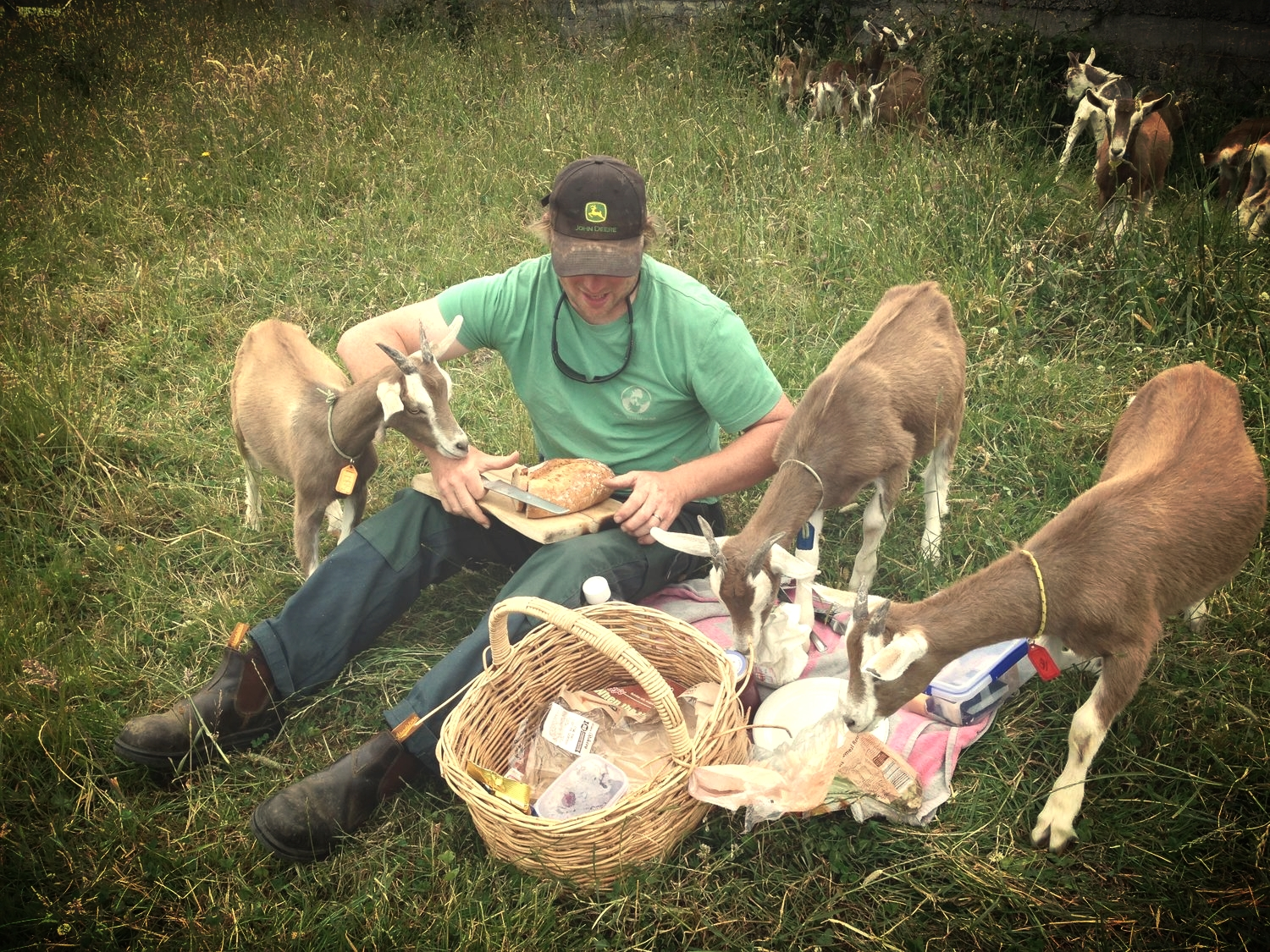 Picnic with the goats