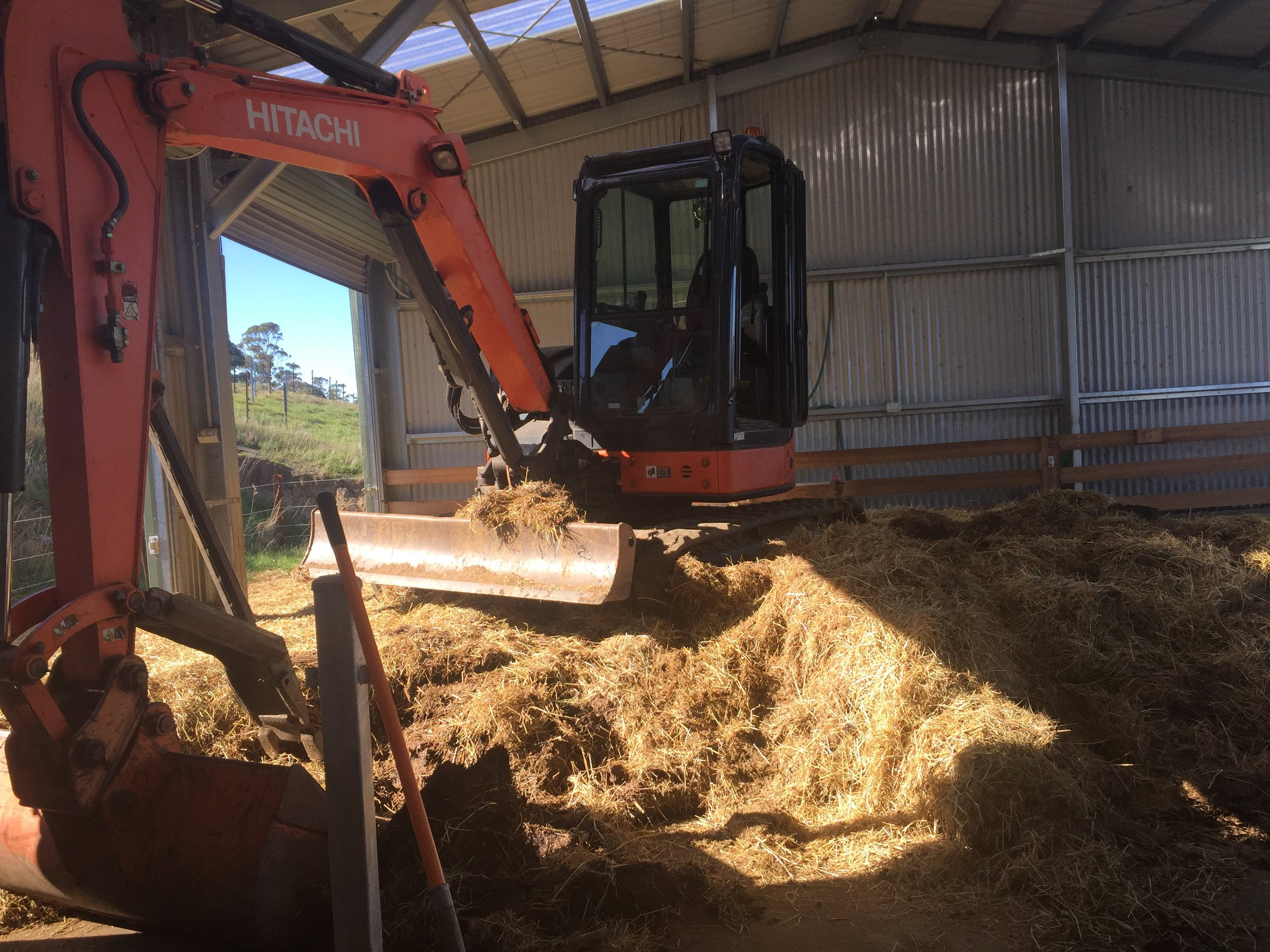 The digger, having a break for morning tea, sitting atop a year's worth of hot composting floor.