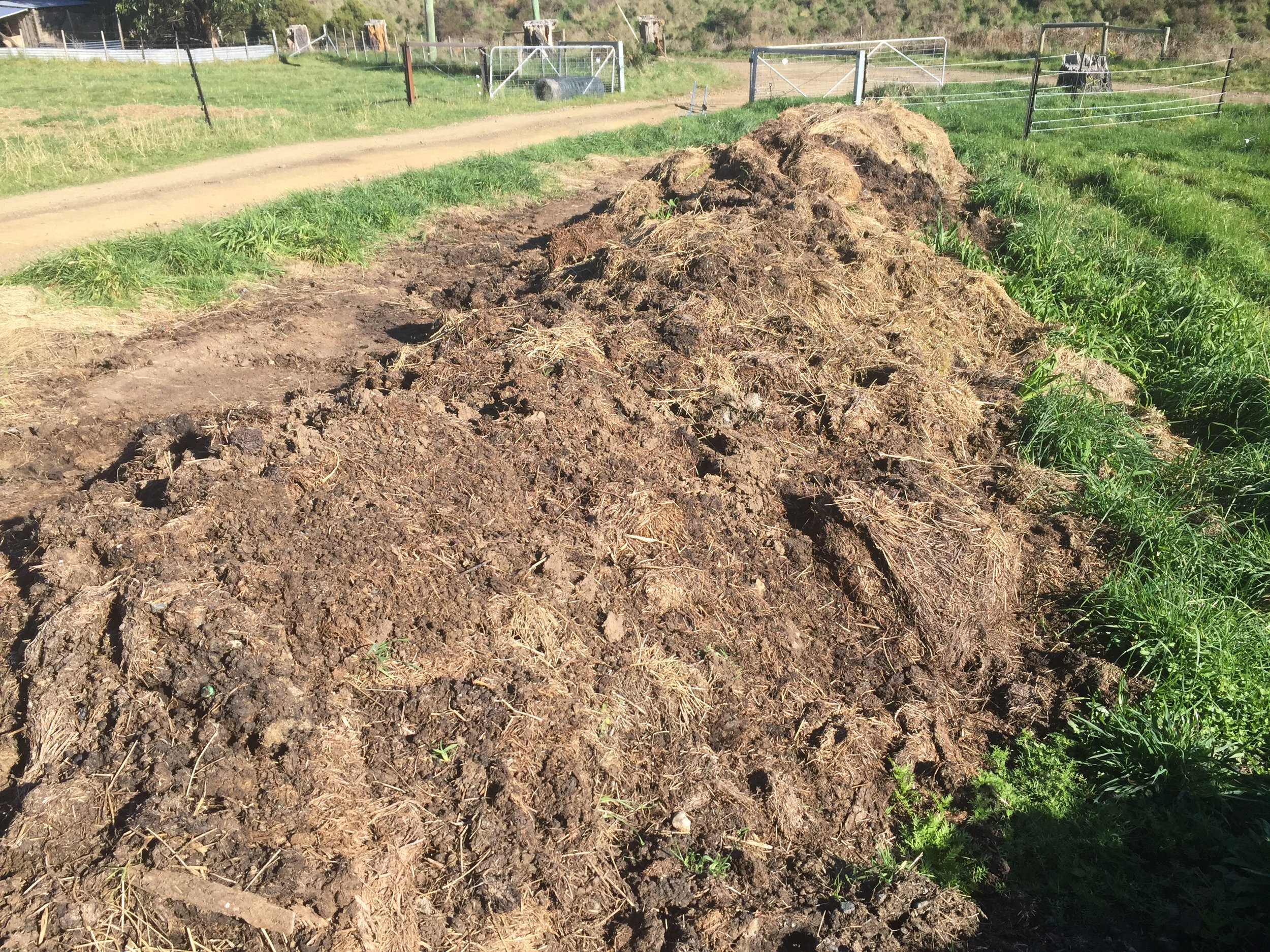 The 2015 compost pile, turned and wetted on several occasions over the course of the year.