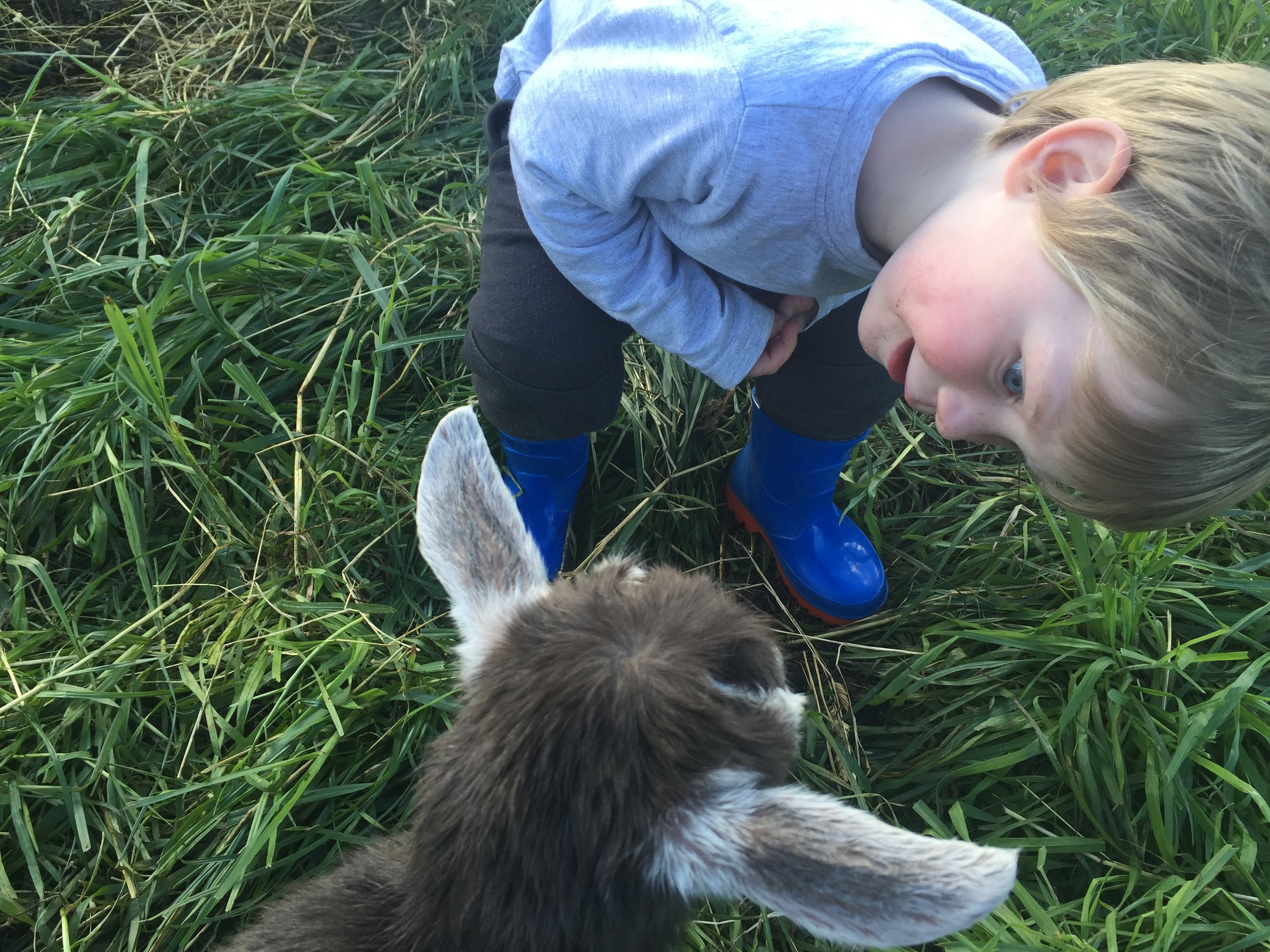 Hamish gets up close to one of Tabby's kids.