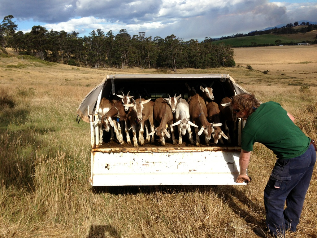 Bringing the girls home after evacuating for the bushfire in January 2013.
