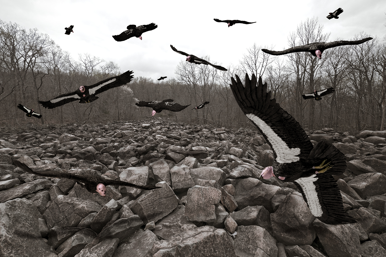 vulture_new.jpg