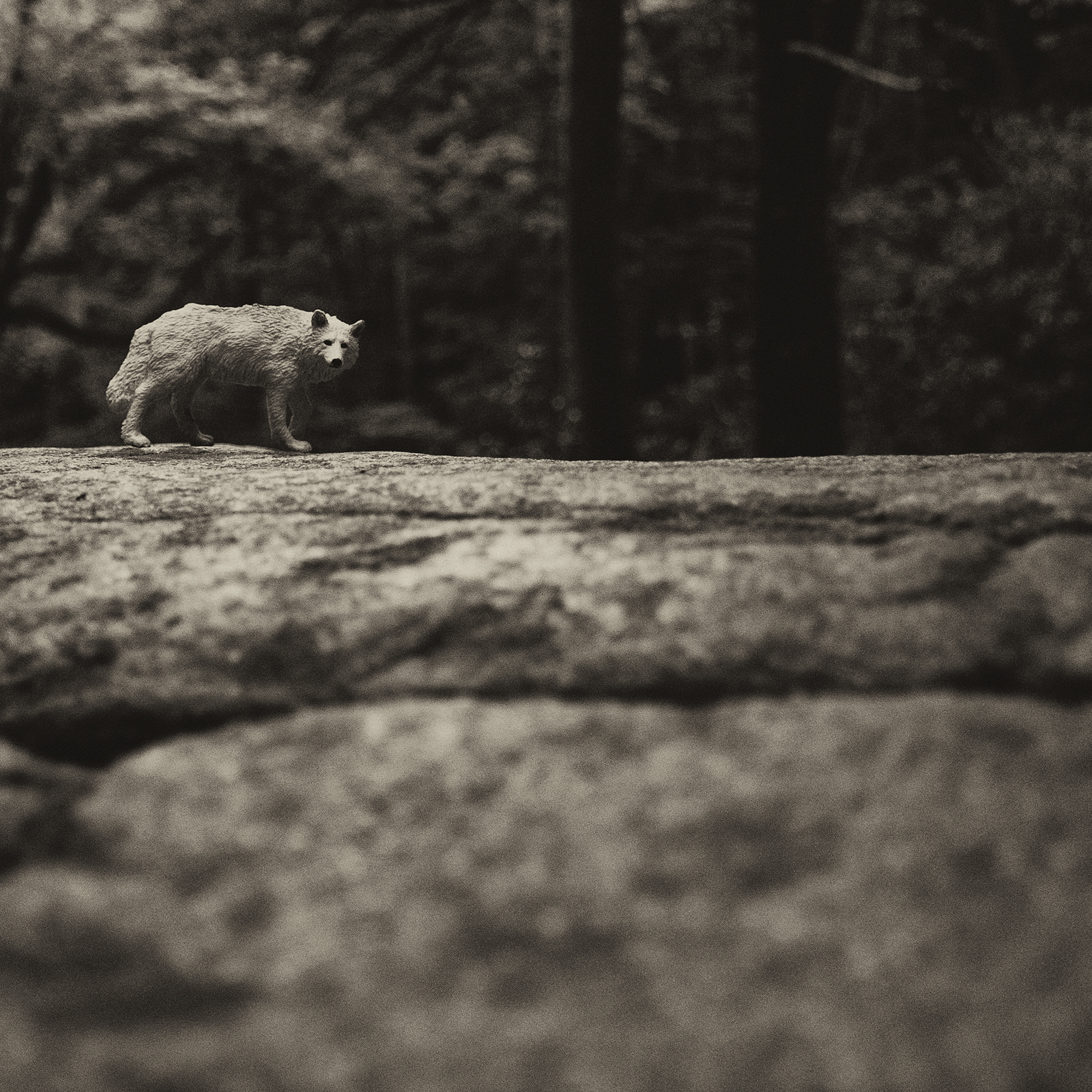 wolf.trail.jpg