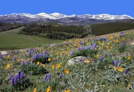 Meadows in the Big Horns, due west
