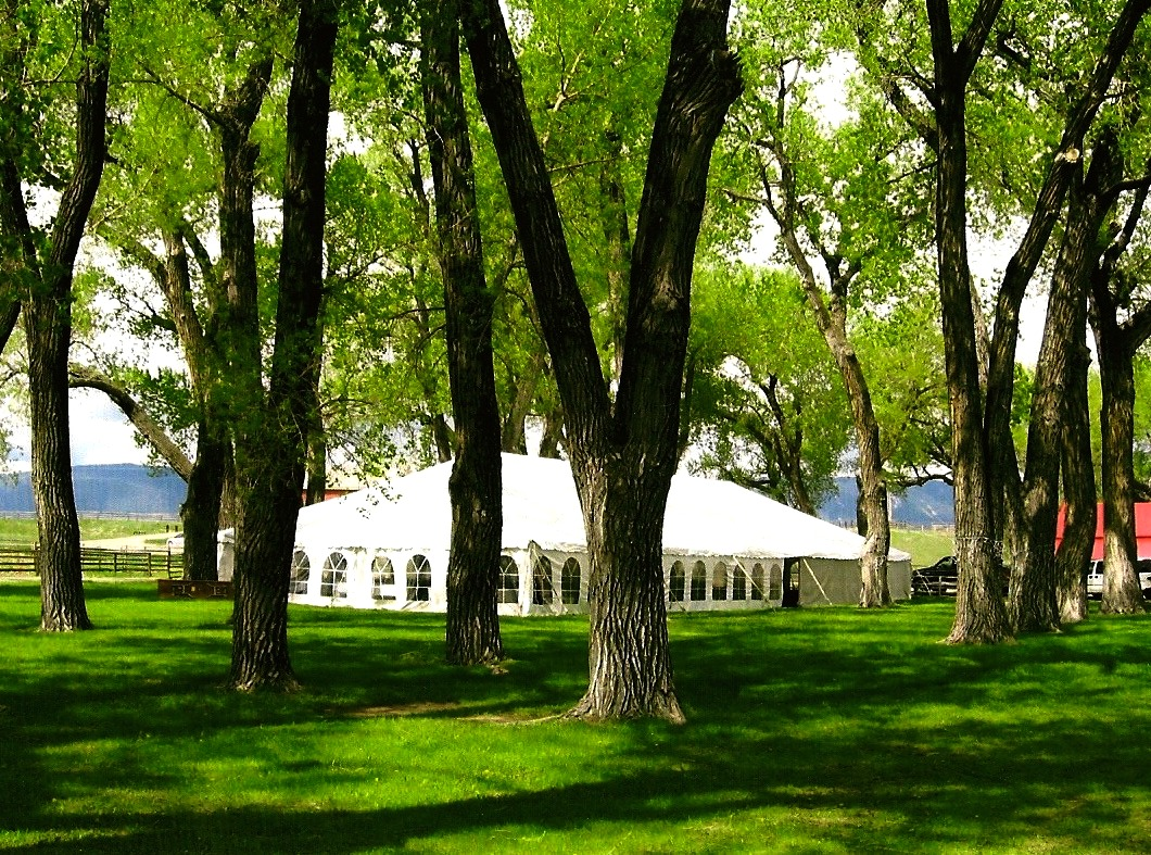 Grove and Tent.jpg