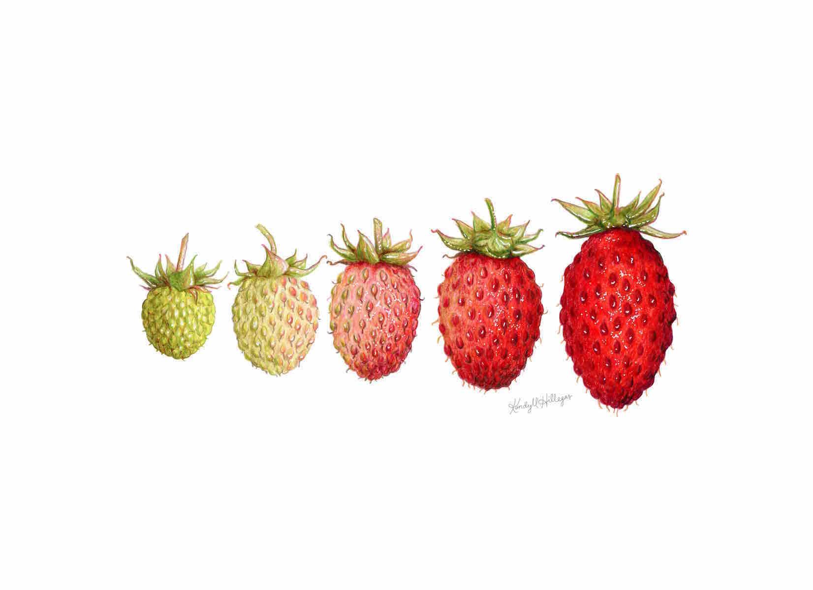 Strawberry+Ombre.jpg