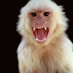 """Monkeys say, """"Stop doing crunches!"""""""
