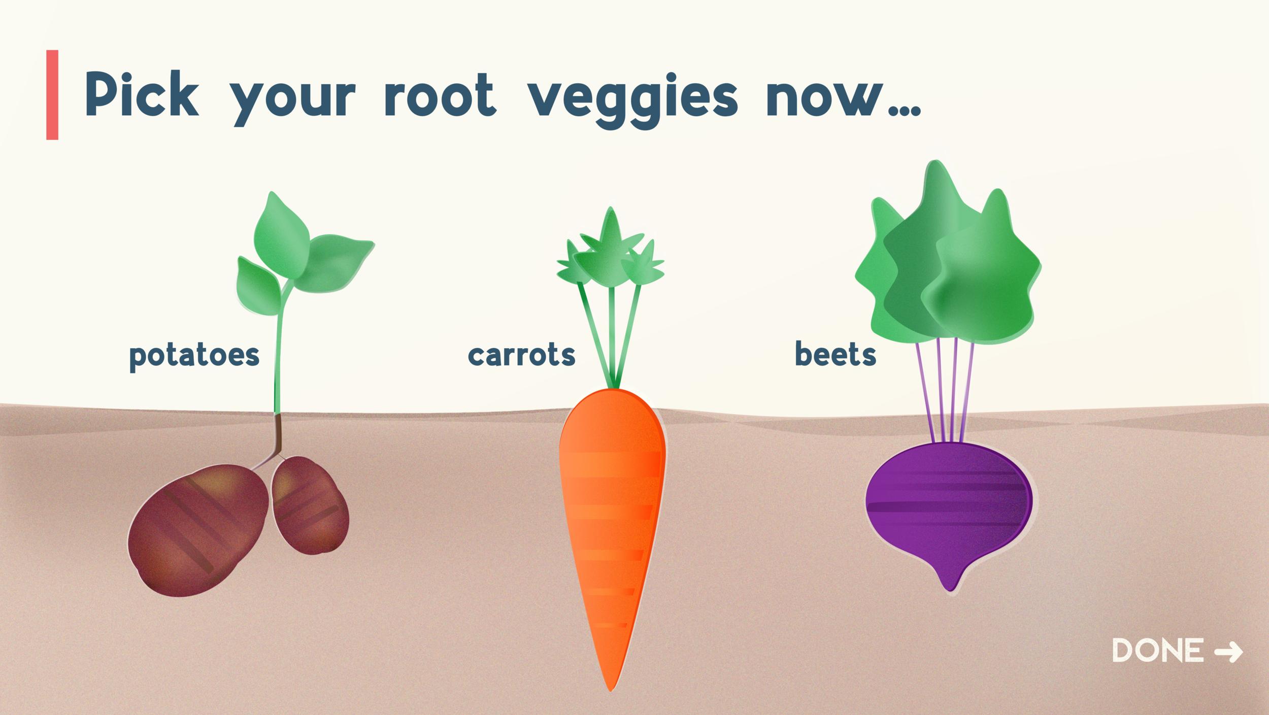 root veggies.png