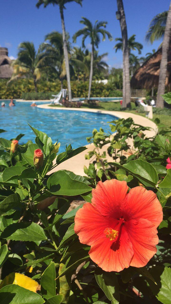 the grand mayan resort