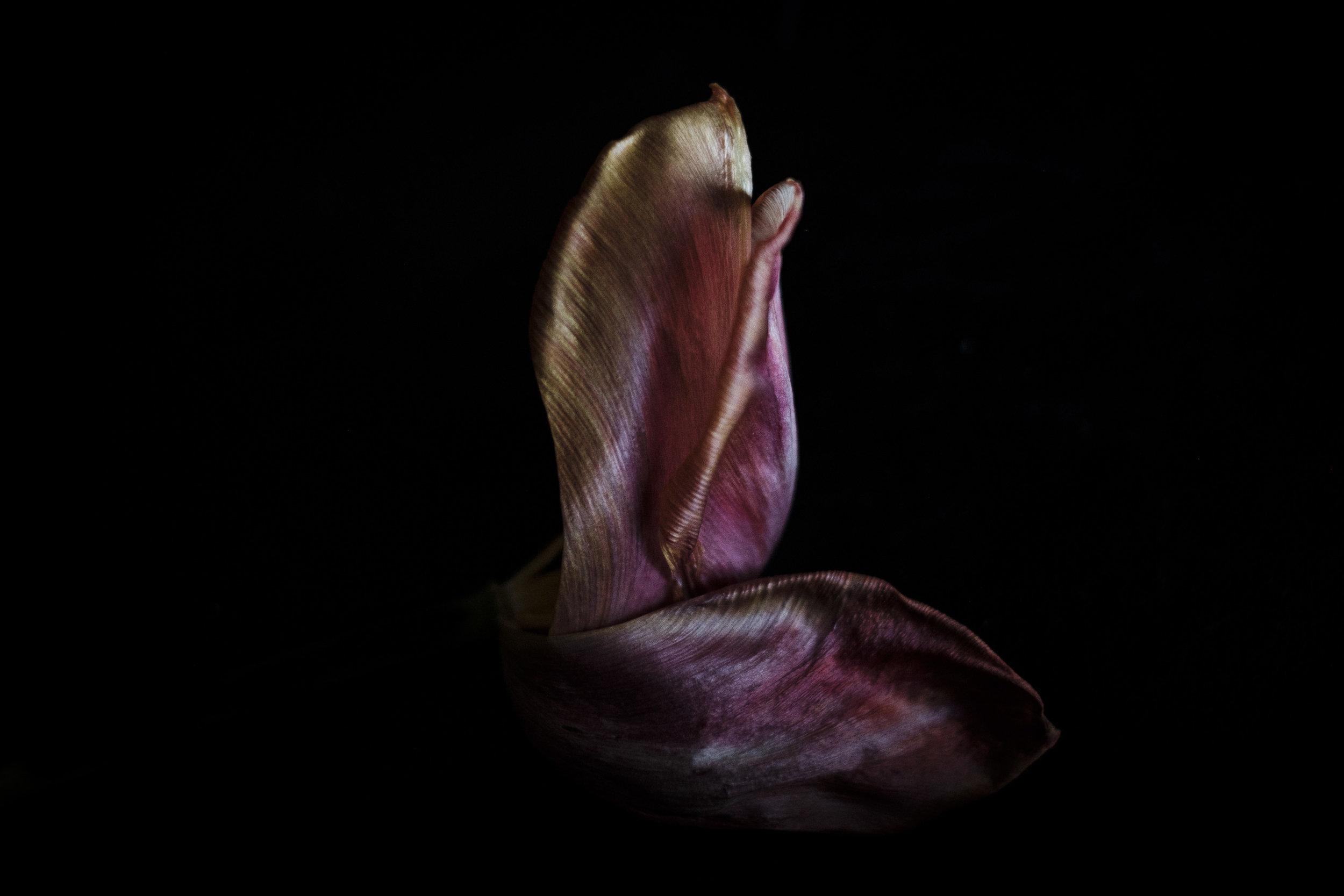 Richard-Stow-Flowers-0455.jpg