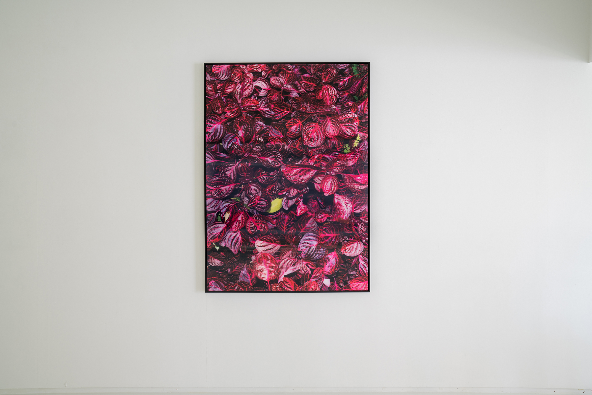 Kai Wasikowski, Looking with a forked tongue, 2016, pure pigment on archival paper, acrylic lenticular lens, 165 x 118 cm.
