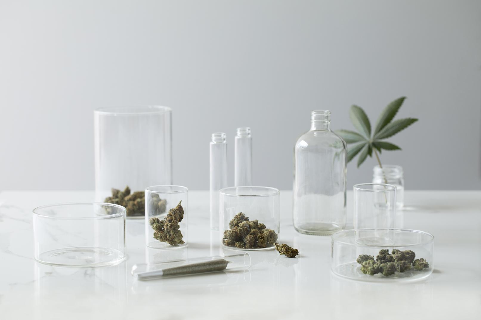 Cannabis Study.jpg