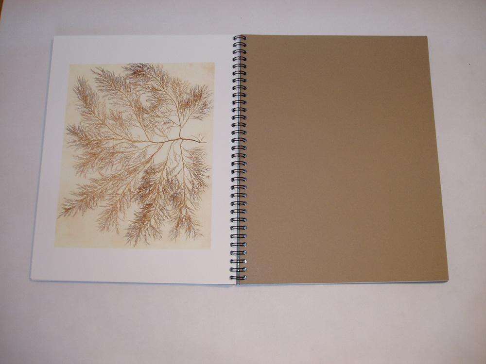 08. Dry Seaweed IV.jpg