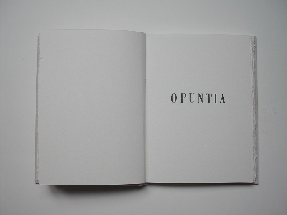 12. Untitled Opuntia (text).jpg