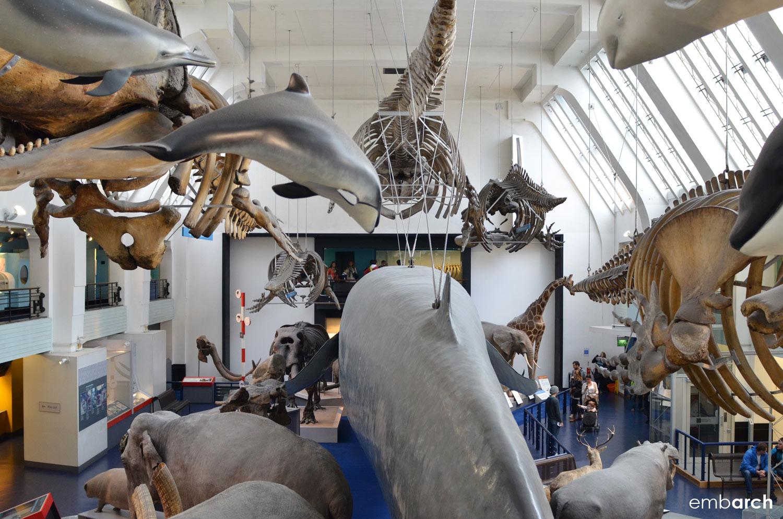 Natural History Museum, London - interior