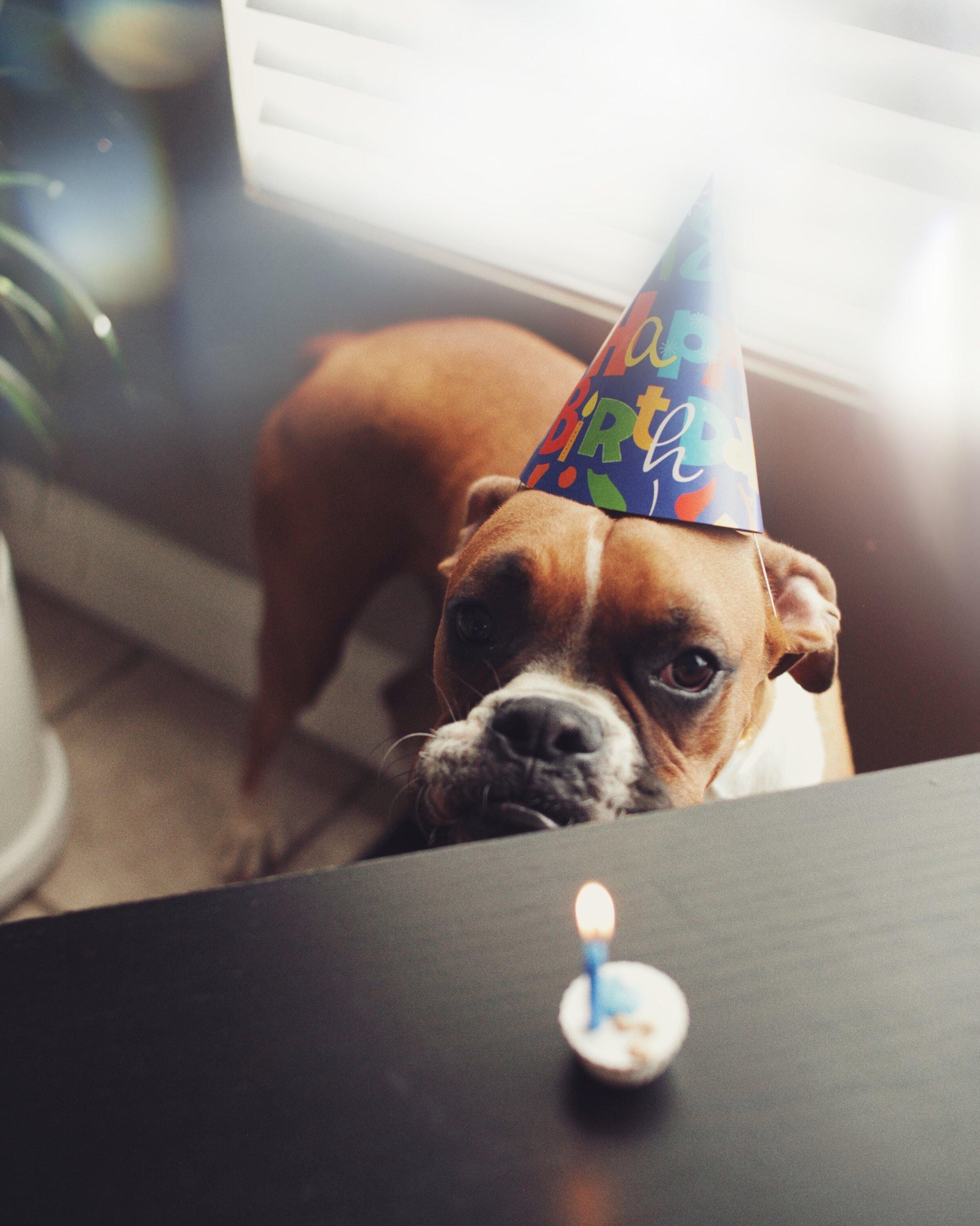 www.Vid-Atlantic.com Prisma Filter Boxer Dog Birthday