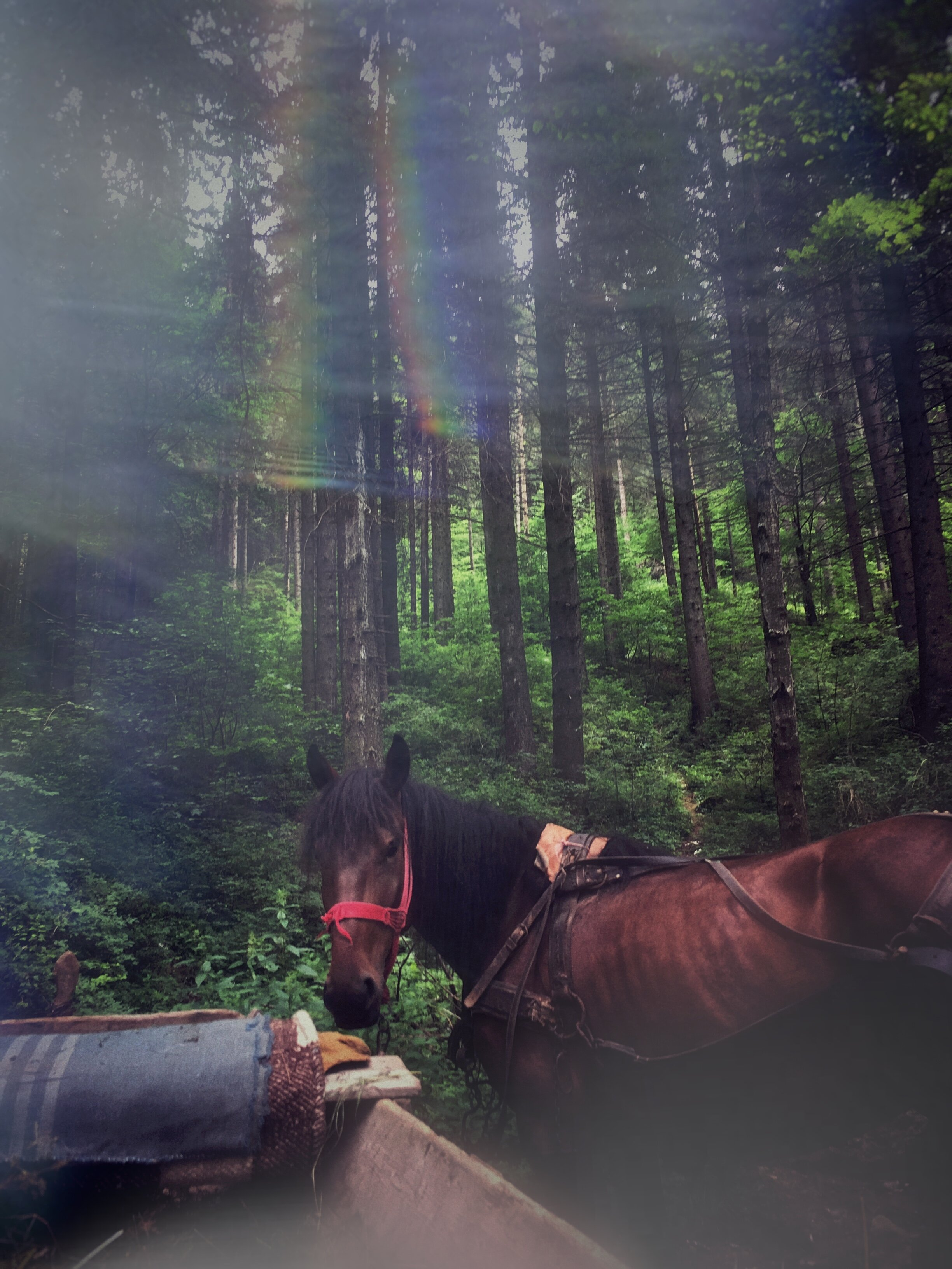 www.Vid-Atlantic.com Prisma Filter Carpathian Forest Horse