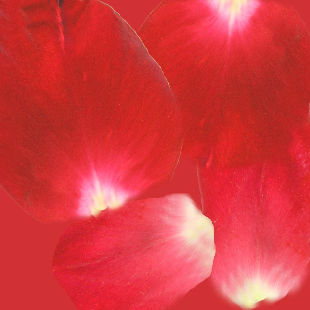 rosePetals_c5.jpg