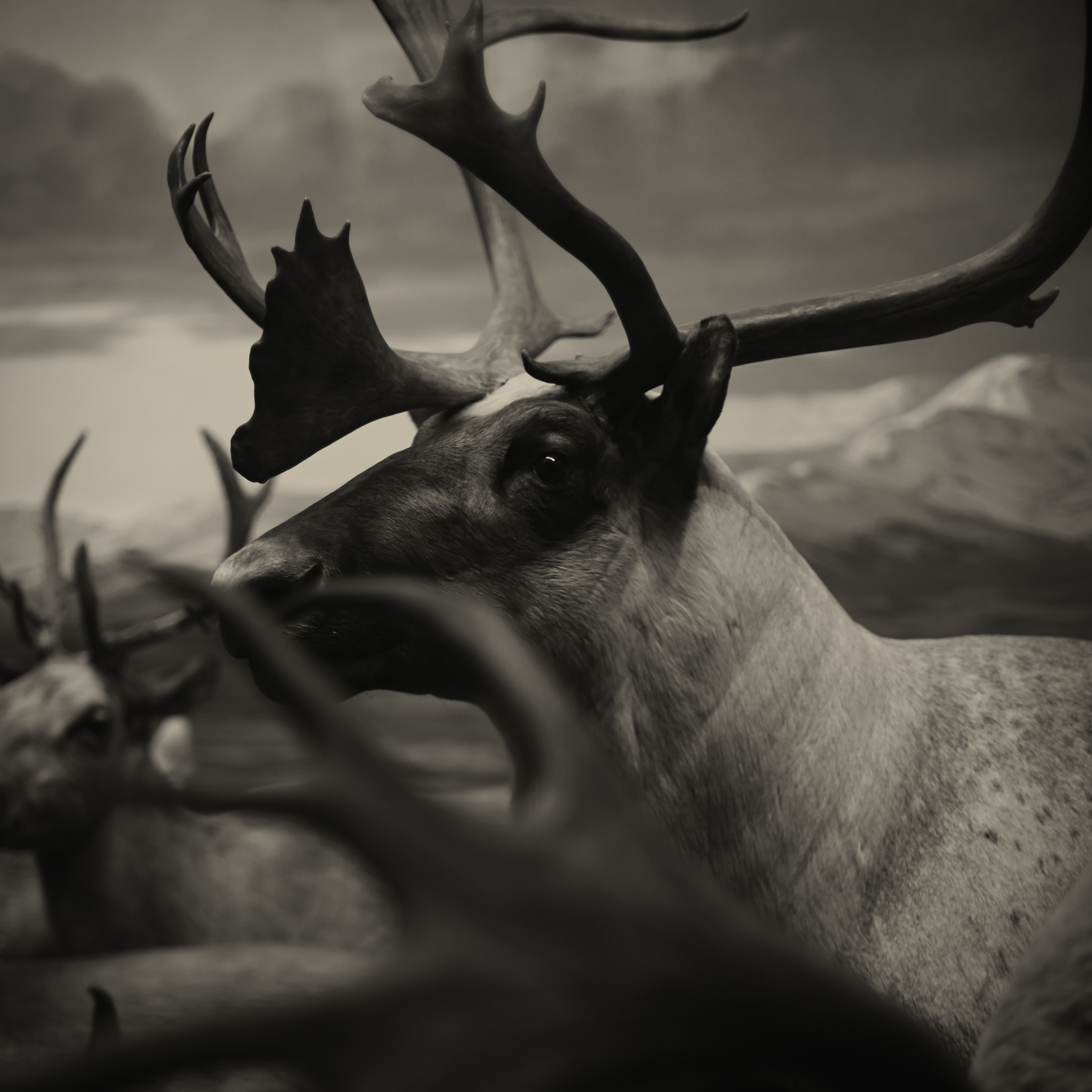 2013_July_NYC_Diorama_128_DeerHead2.jpg