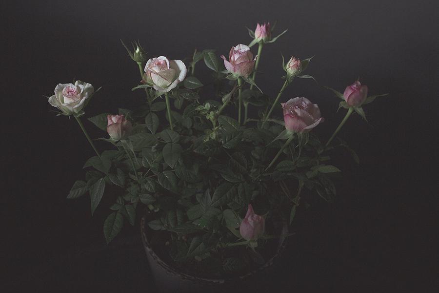 Still Life Valentines Day-46 web.jpg