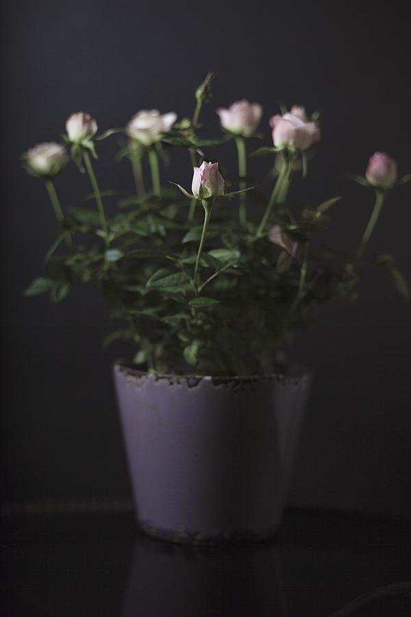 Still Life Valentines Day-26 web.jpg