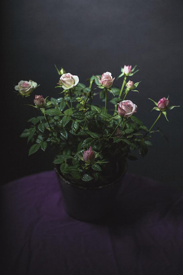 Still Life Valentines Day-9 web.jpg