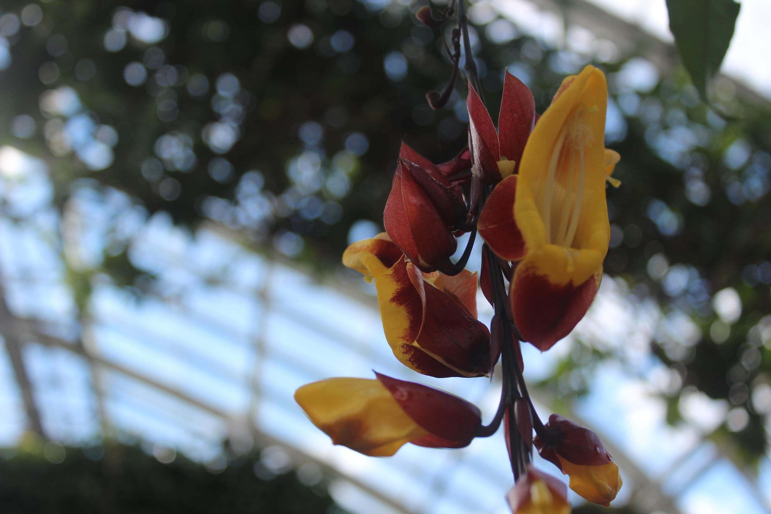 Botanical Garden 081.JPG