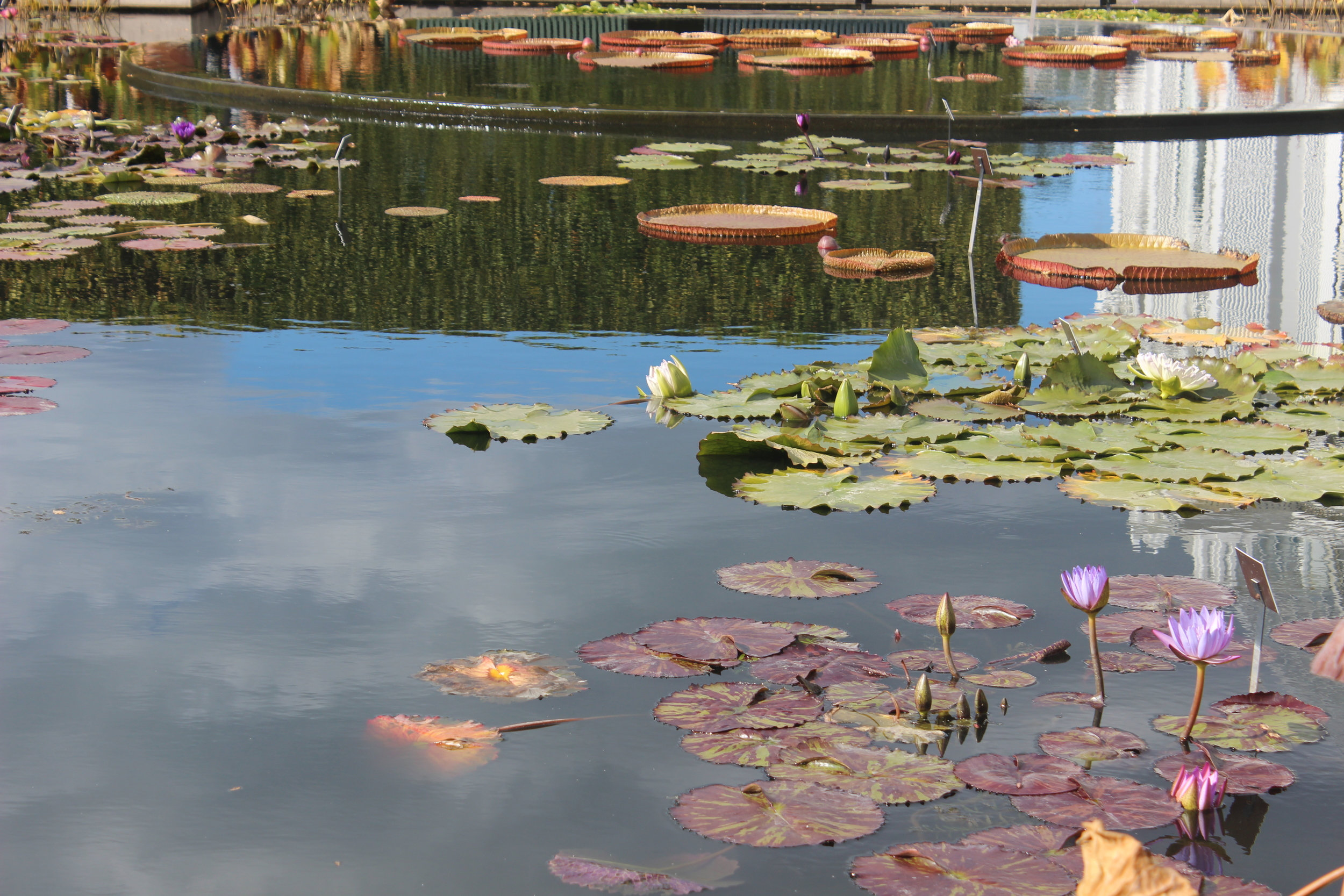 Botanical Garden 080.JPG