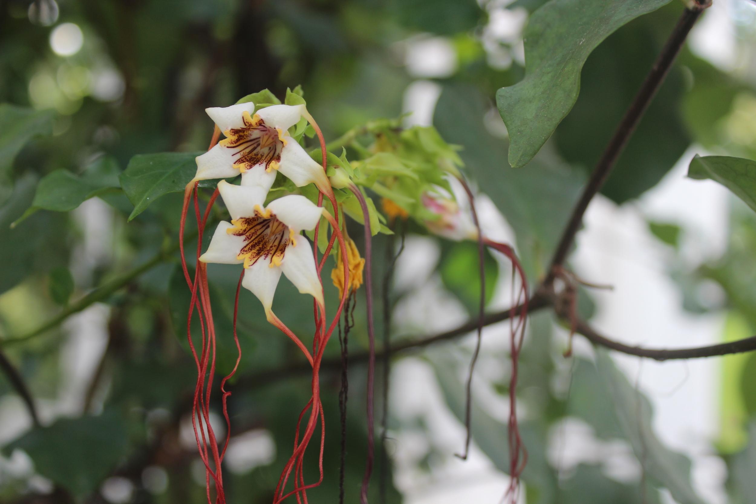 Botanical Garden 082.JPG