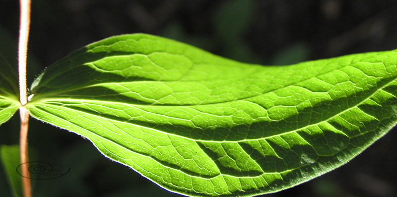 green leaf hamoc-1.jpg