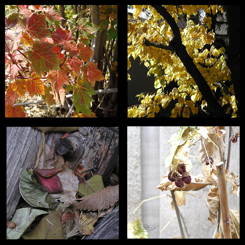 fall collage-1.jpg