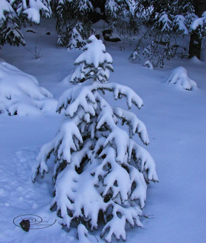 small tree-2.jpg