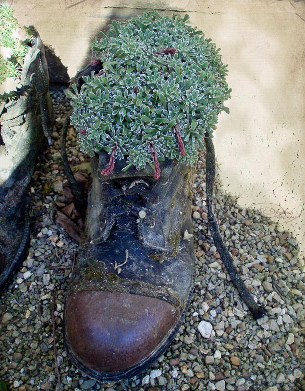 gardeners boot-1.jpg