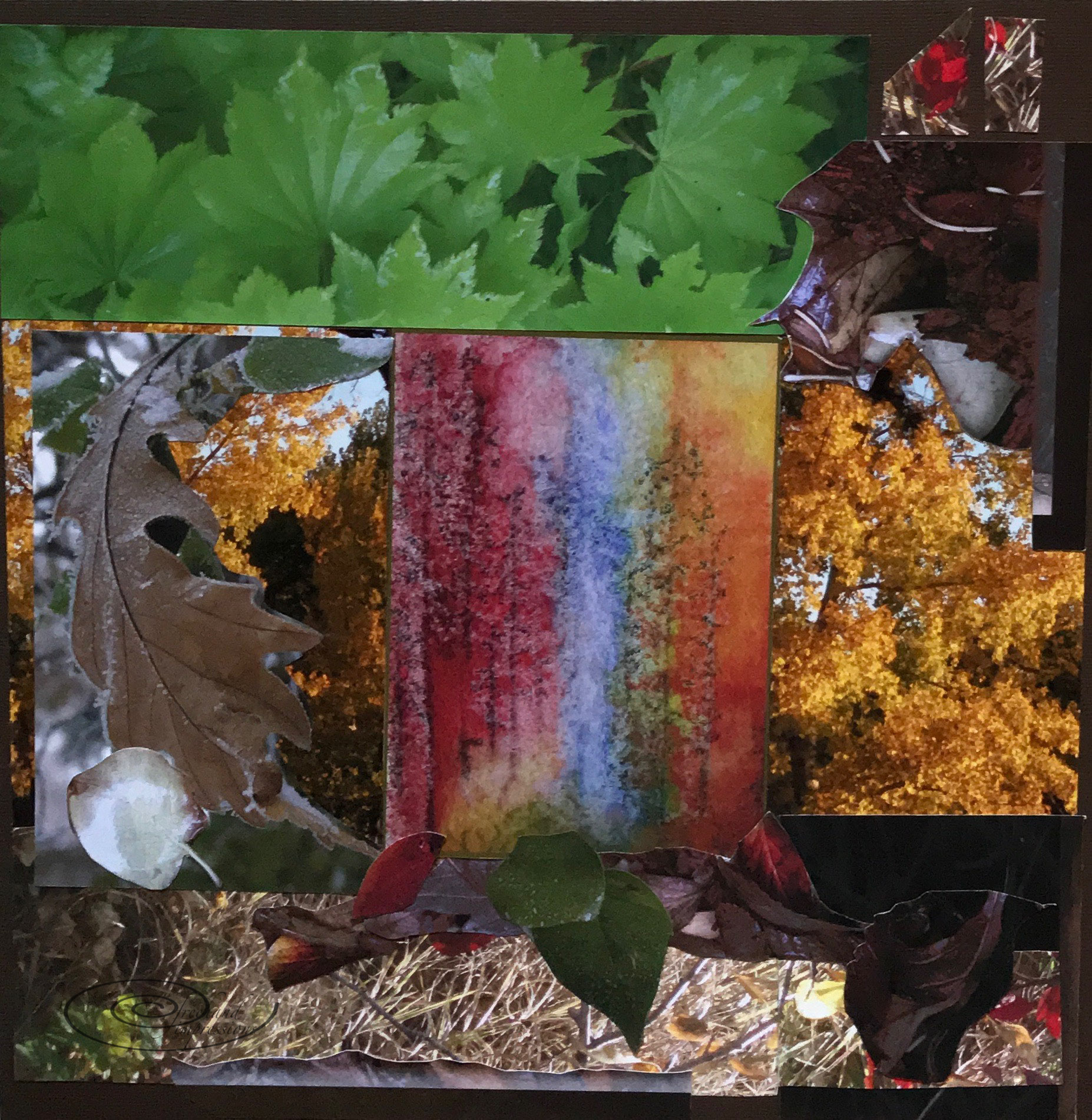 forest collage-1.jpg