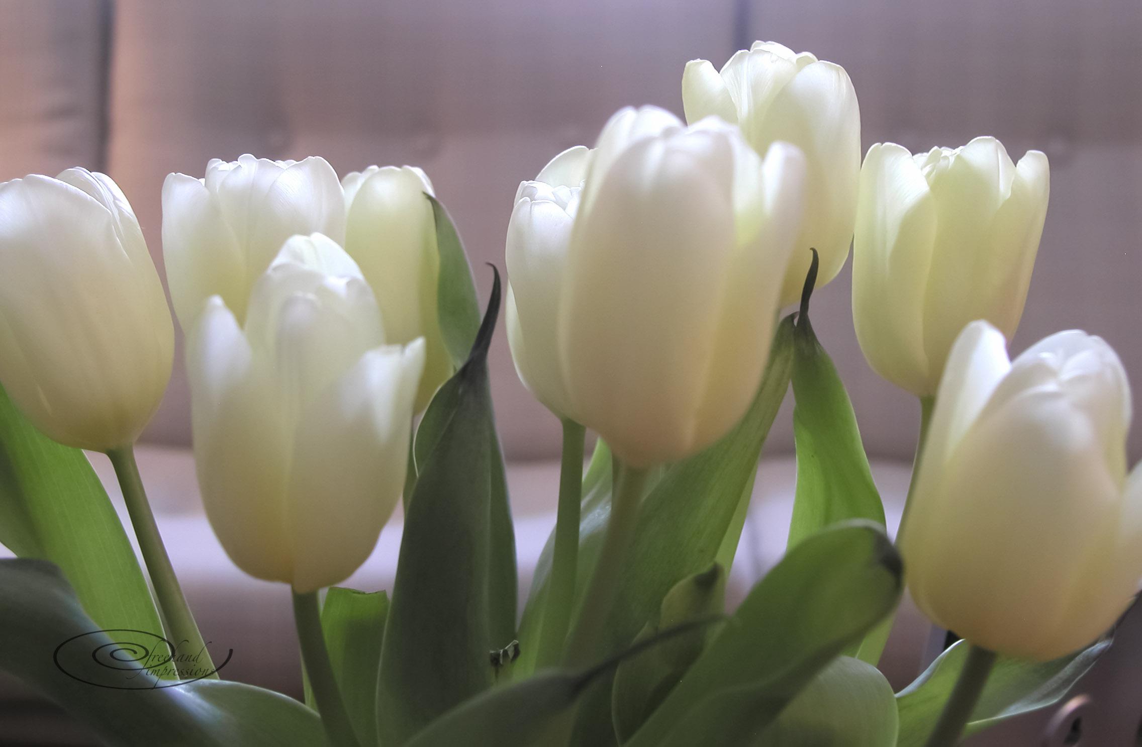 lemonade tulips-1.jpg