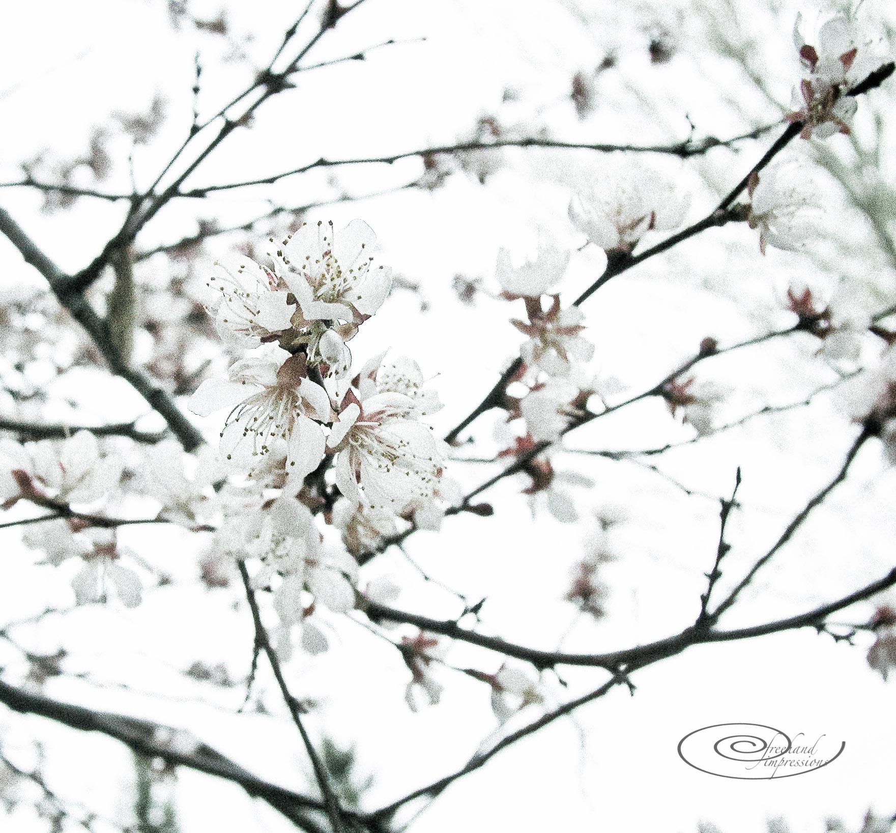 toned blossom-1.jpg